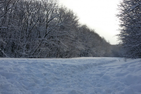 Самарцы хотят сохранить парк