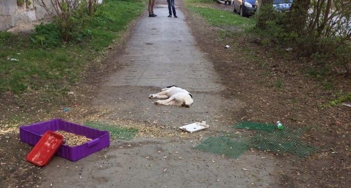 На Компрессорном мужчина выкинул из окна собаку, пятерых котят, кролика и улиток