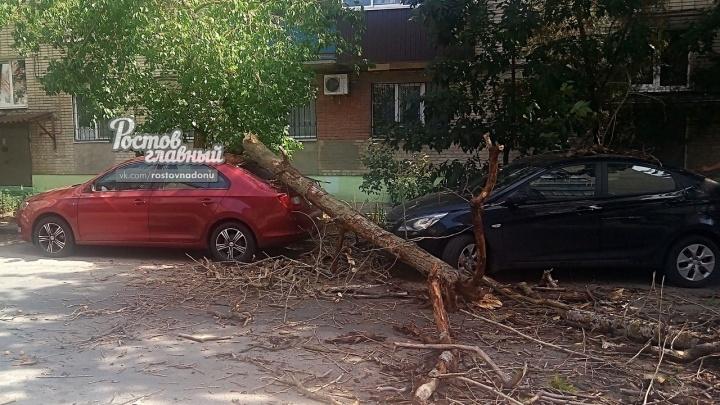 В центре Ростова рухнувшее дерево разбило иномарку