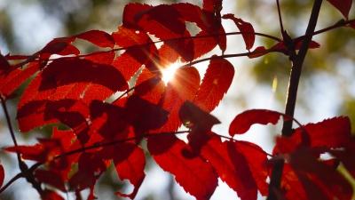«С теплом и любовью, ваша осень»: фоторепортаж о самом красочном времени года