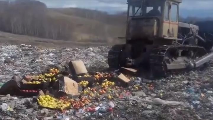 Бульдозером раздавлены очередные 600 кг яблок из Польши