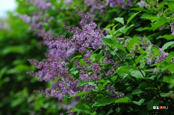 Многие растения в эти дни набирают цвет