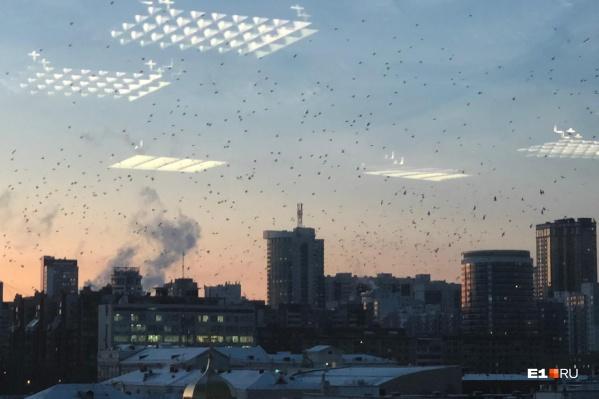 «Птичий апокалипсис» — так это фото подписала читательница E1.RU Виктория. Оно сделано из БЦ «Саммит»