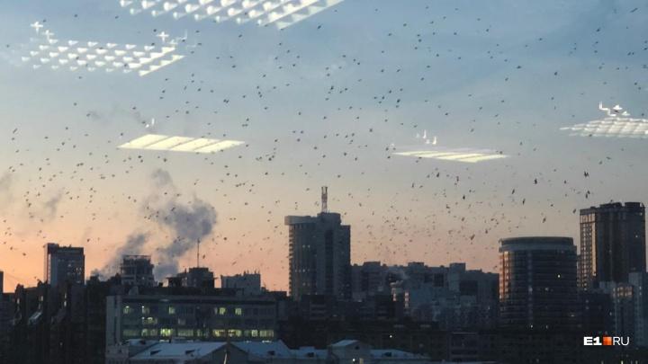 Бесчисленная стая птиц, замеченная в Пышме, добралась до центра Екатеринбурга