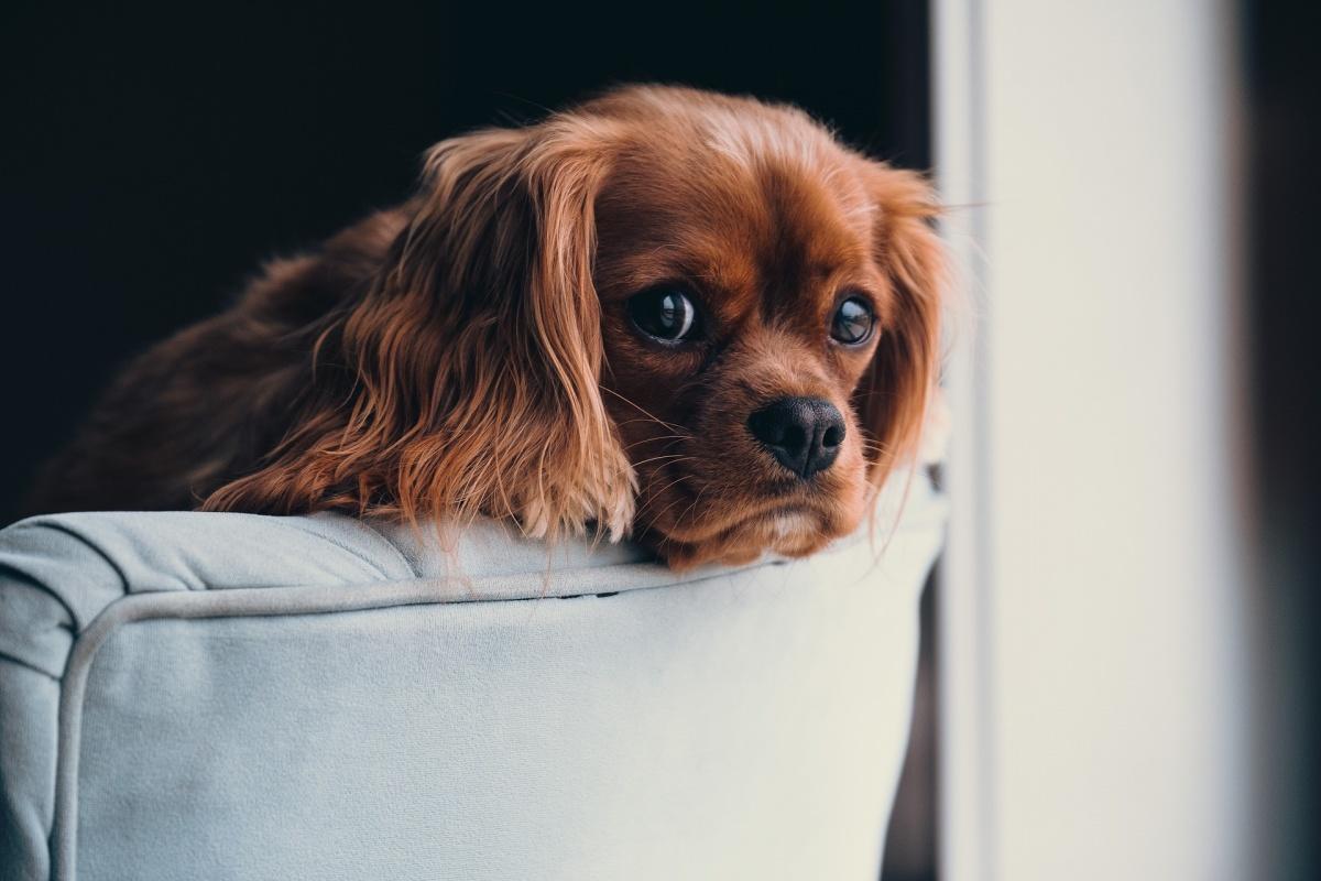 Жизнь собачья: что делать, если соседский пес мешает спать