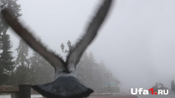Гроза и ветер надвигаются на Башкирию