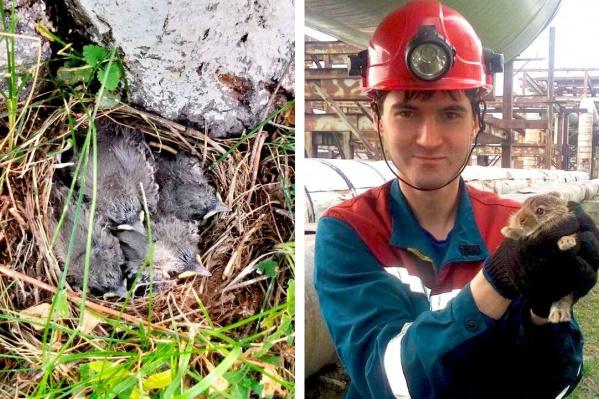 На ТЭЦ-5 нашли зайчонка и несколько птенцов трясогузки