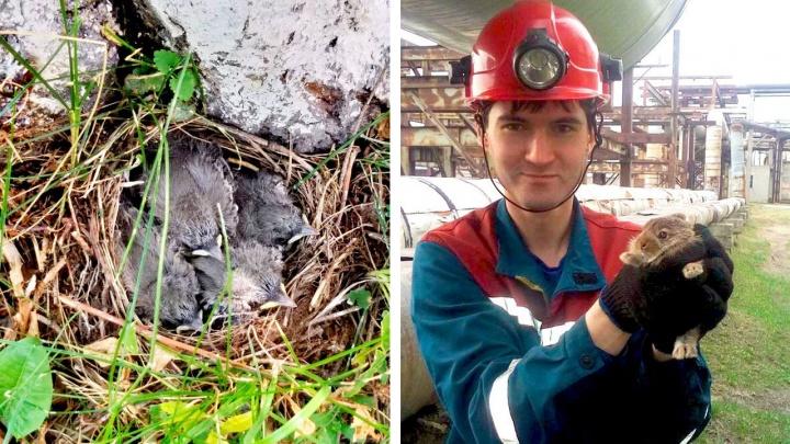 Энергетики нашли на ТЭЦ-5 дикого зайчонка и решили назвать его Пушистиком