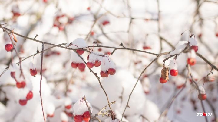 Синоптики Гидрометцентра пообещали необычно тёплую погоду в ноябре