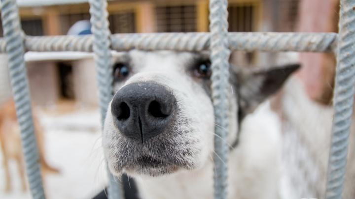 «Герда скулила»: самарец попал под статью за избиение собаки перед детьми