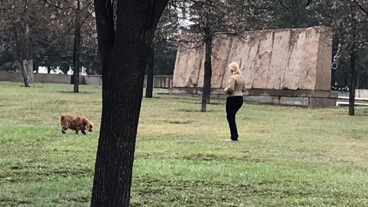 «Нас не слышат»: от челябинских властей потребовали запретить выгул собак в сквере у Вечного огня