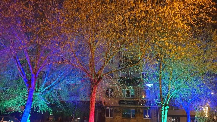 «Сделали акцент»: сотню деревьев подсветили в Железнодорожном районе