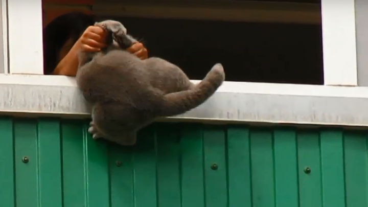 В «Солнечном» ребенок собирался сбросить с балкона породистого кота