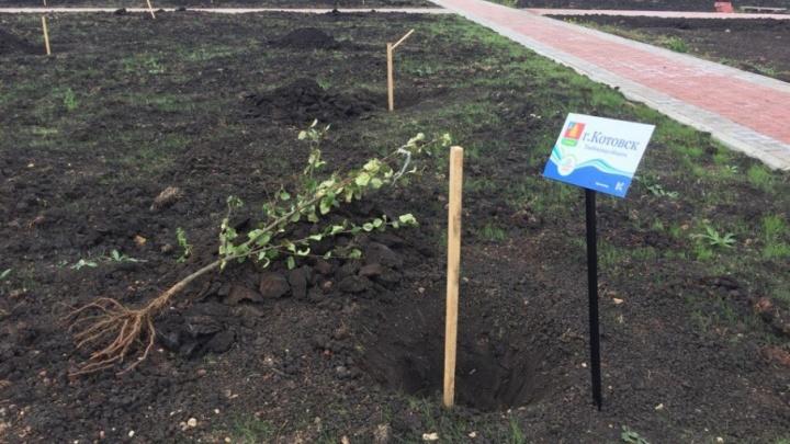 В Башкирии в честь российских городов посадят яблоневую рощу