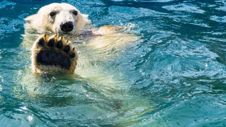 «Роев ручей» стал четвертым по популярности зоопарком России