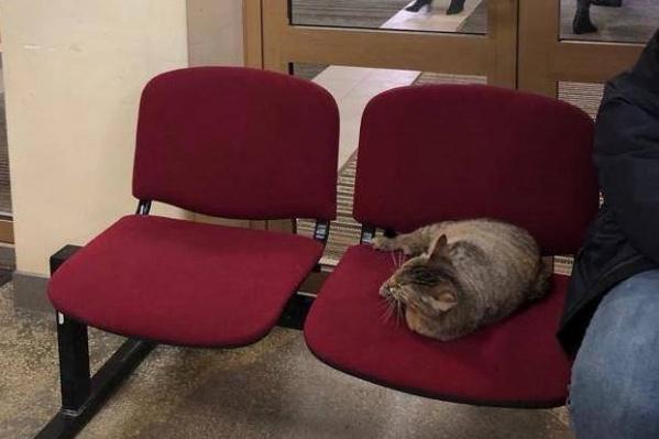 Кот беспрепятственно передвигается по зданию администрации и лежит, где захочет