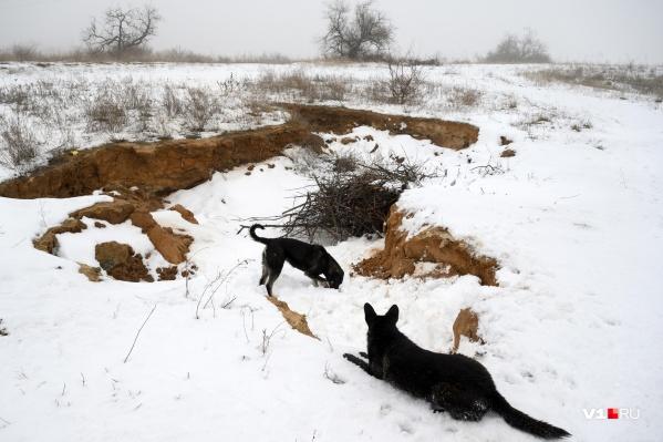 Бездомные собаки стали проблемой Волгограда