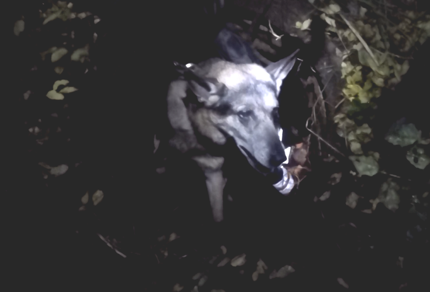 Собаку вытаскивали в кромешной темноте