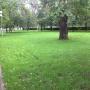 «Приходят семьями, устраивают пикники»: челябинцам запретили сидеть на новых газонах на Алом Поле