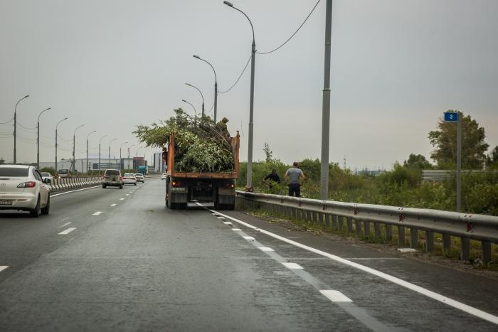 В сети ТУАД 12 тысяч километров дорог — деревья сейчас срезают по всем направлениям