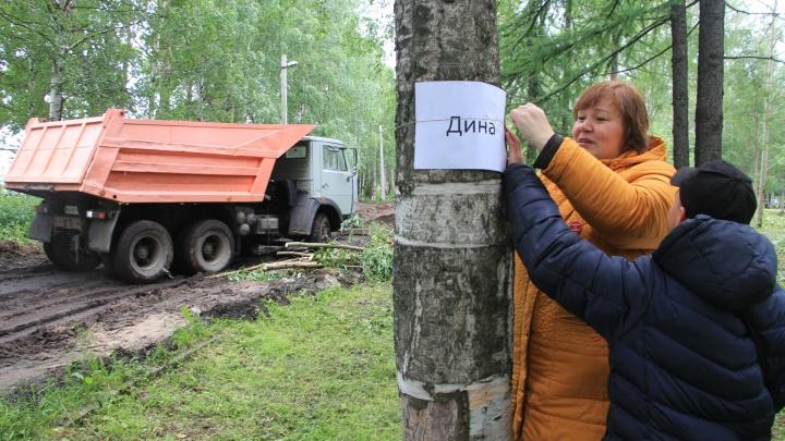 Сергей и Регина, живите: в парке на Галушина активисты дали имена деревьям, которые хотят вырубить
