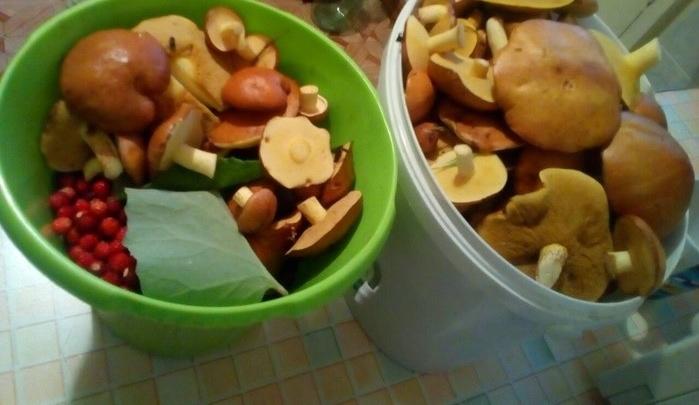 Греби грибы! Готовим мороженое из рыжиков и печенье из лисичекс уральскими шеф-поварами