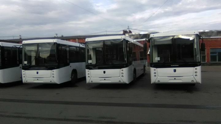20 новых больших автобусов выйдут на омские дороги в следующем году