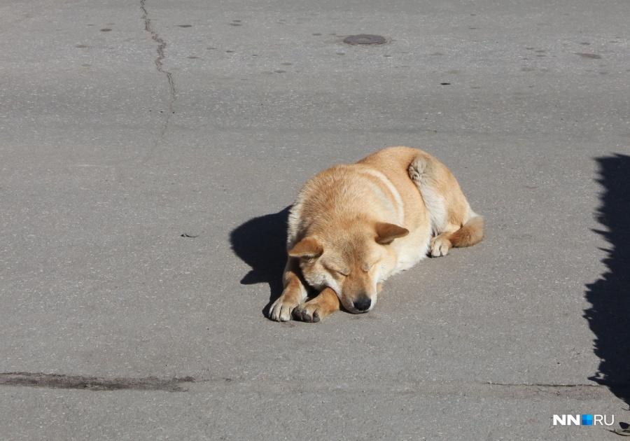 Собаку, больную бешенством, отыскали вКстовском районе