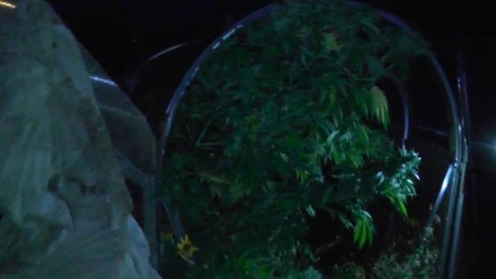 В Арзамасе у местного жителя отобрали два мешка конопли
