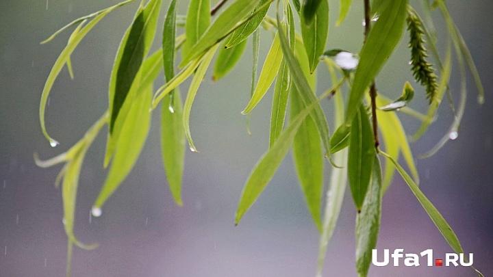Башкирию накроет кратковременный дождь и ветер
