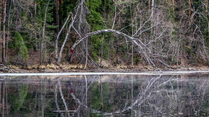 Олени, болота и дикий лес. Путешествуем в русскую тайгу в 100 километрах от Нижнего Новгорода