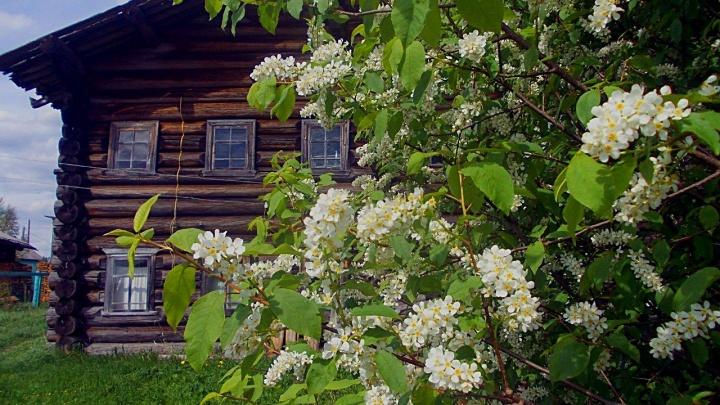 Веркола войдет в число самых красивых деревень России