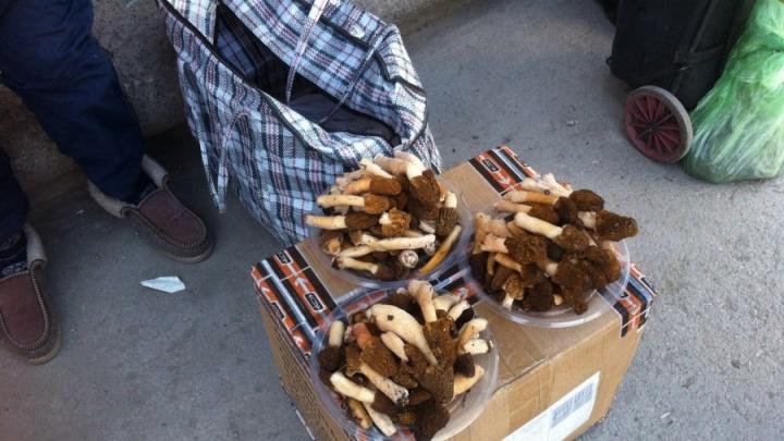 В лесах под Новосибирском выросли первые грибы