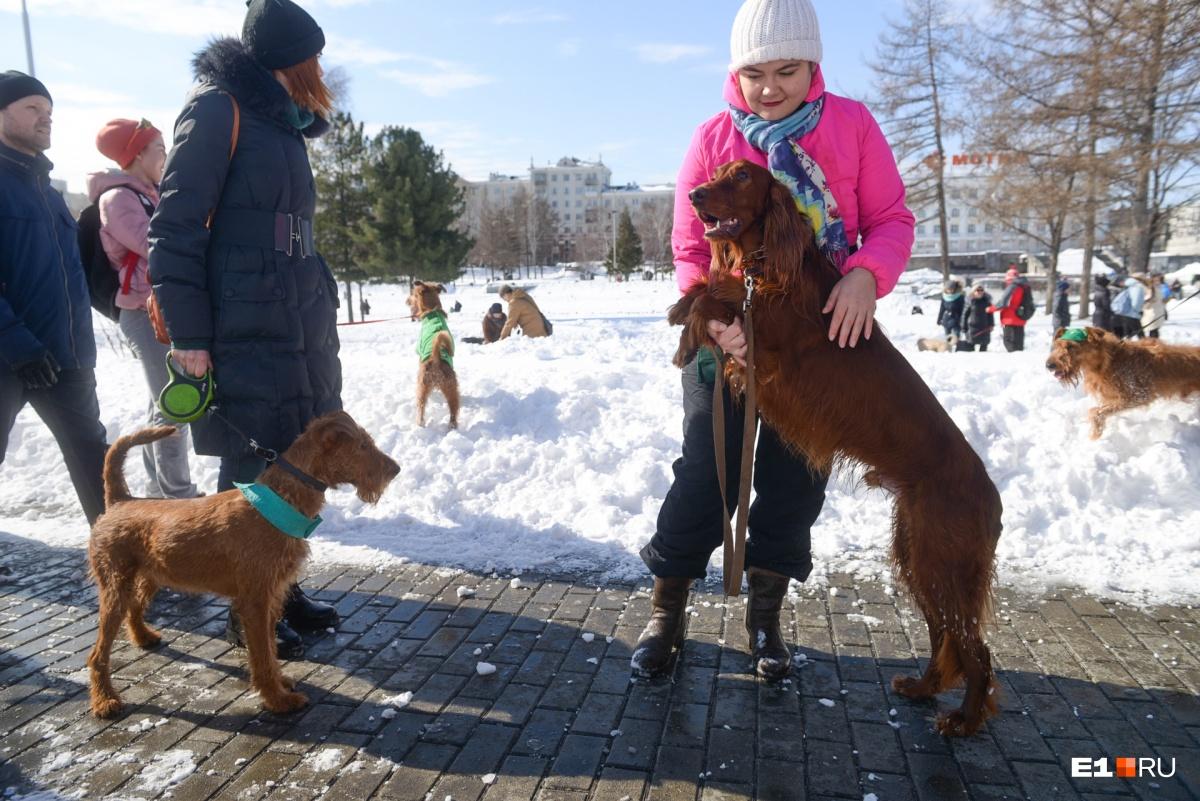 Ирландские собаки и их владельцы вышли призывать весну на Плотинку в День святого Патрика