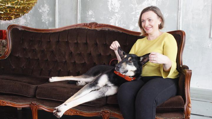 Бездомные собаки стали моделями и собрали более 20 тысяч рублей для новосибирского приюта