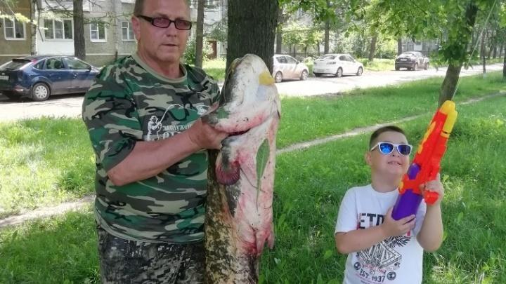 «Сын боялся подойти к рыбе»: ярославец поймал сома размером с человека