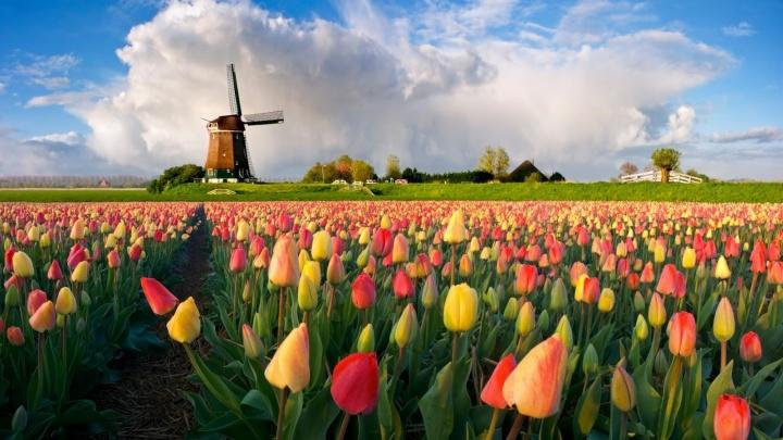 У екатеринбуржцев появилась возможность получить образование в Голландии и найти работу за рубежом