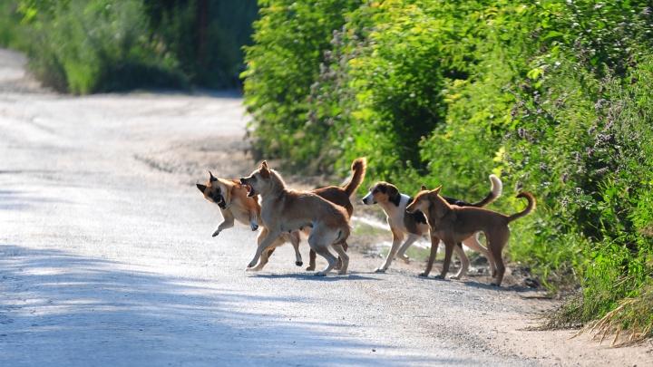 «Не показывать свой страх»: кинолог рассказывает, как защититься от агрессивной собаки