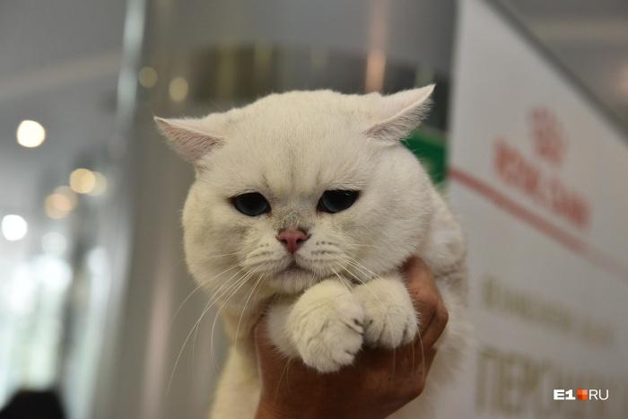 На выставку привезли более 170 котиков