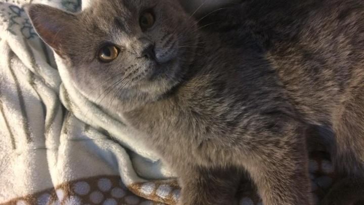 В Ростове в районе Нахичевани неизвестный отстреливает домашних животных