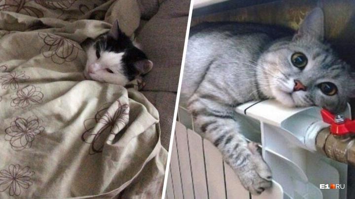 Может, хоть это проймет коммунальщиков: фото замерзающих котиков из квартир Екатеринбурга