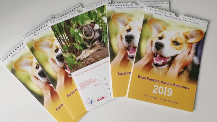 Милые собаки с непростой судьбой попали в календарь 2019 года
