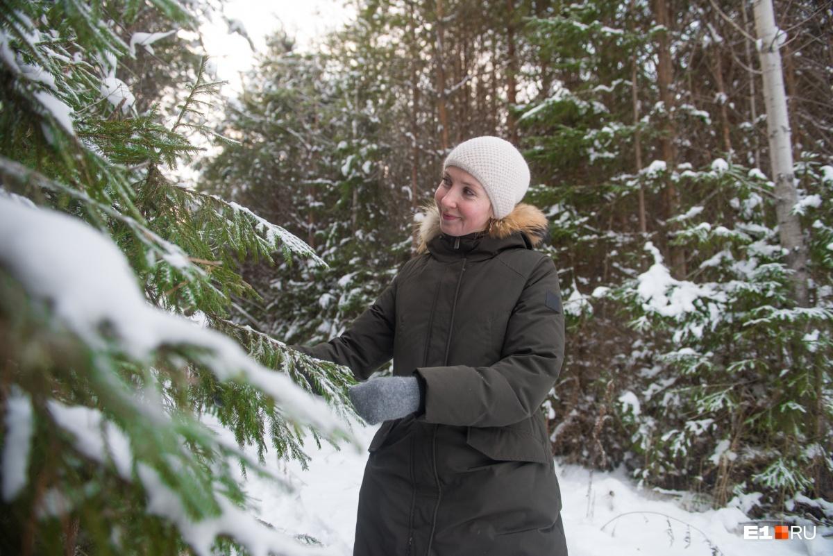 Вот в такой лес мы поехали рубить елочку