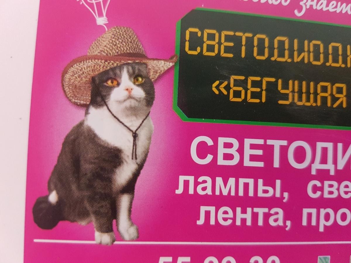 Кот Светодиод работает в курганском магазине фотомоделью и психологом