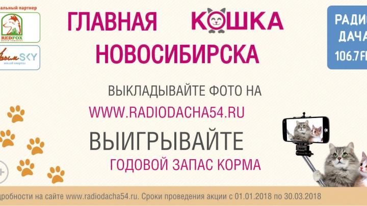«Радио Дача» разыскивает главную кошку города