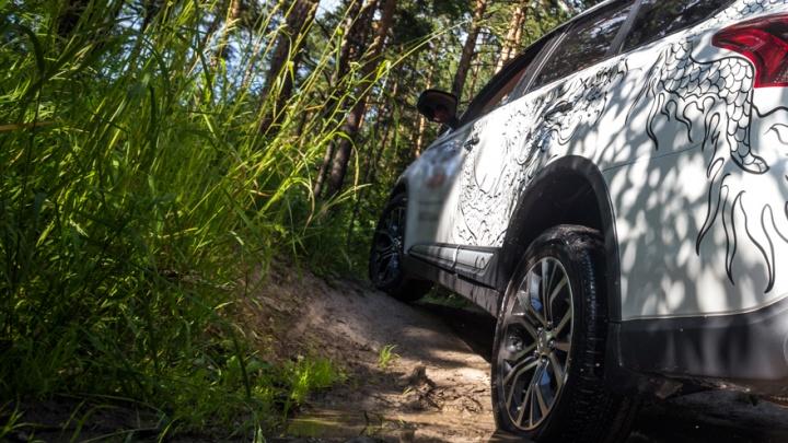 «Орудует банда»: воры обокрали грибников в лесу под Новосибирском
