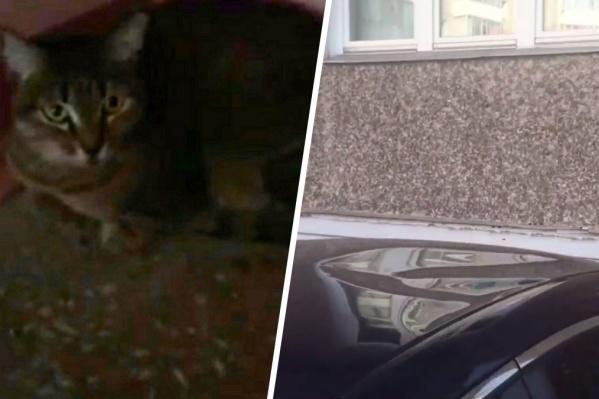 Выживший кот и помятая им крыша машины
