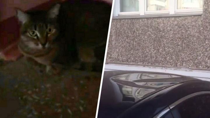 Видео: упавший с высоты кот помял крышу иномарки. Его плач растрогал хозяина авто и соцсети