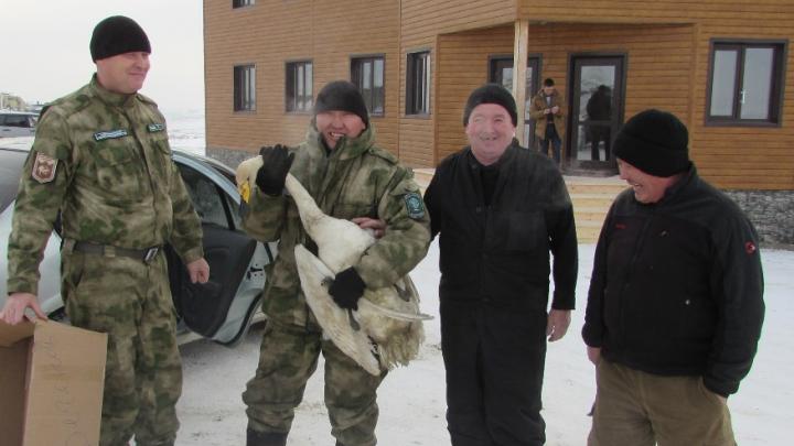 На Алтае пожарные спасли отставшего от стаи лебедя