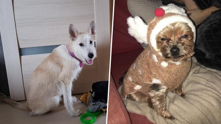 Из Пипина в Тревора, из Карамельки в Бобби: как брошенные северянами собаки нашли свой дом в Европе